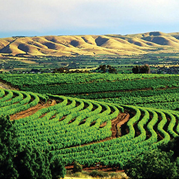 南澳葡萄产区