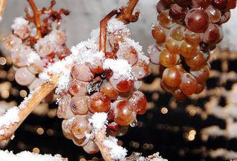 环境恶劣,法国葡萄急剧减产,助国产红酒一臂之力?